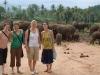PINNEWELLA ELEPHANT ORPHANAGE.jpg